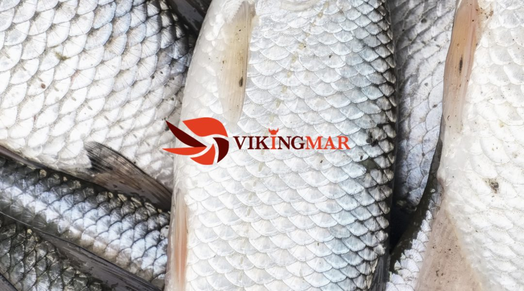 Vikingmar, our Scandinavian prawn