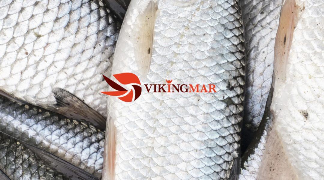Vikingmar, our Scandinavian prawn
