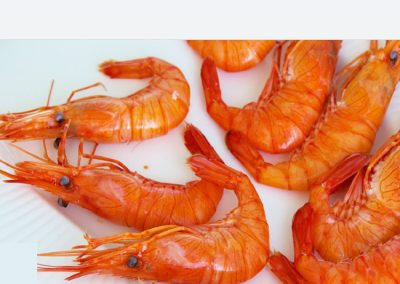Northern Prawn
