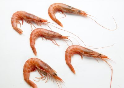 Deep-Water Rose Shrimp